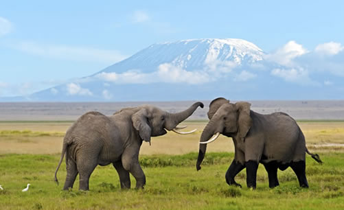 Kenya and Tanzania Combined Trips