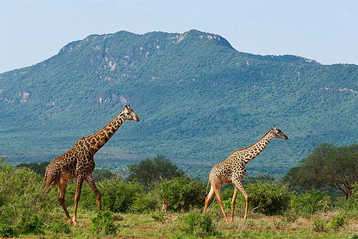 3 Days Tsavo East and Amboseli National Park